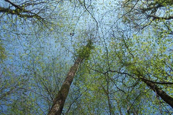 Akha des Terres d'Ilex - Page 5 Akha-09-04-2007-12